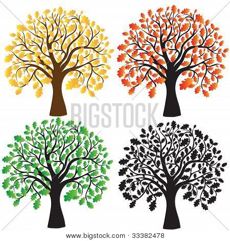 Four oak with yellow, red, green foliage. Ebony.