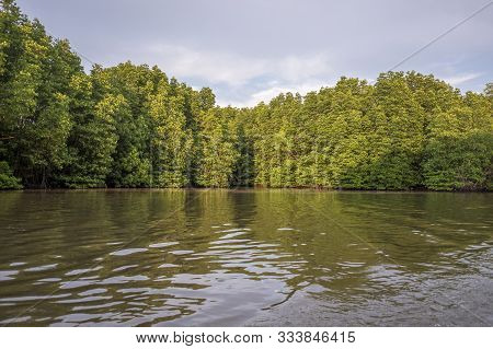 Mangrove Forest In  Chantaburi Province Of Thailand