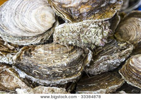 Fresh delicious oysters (closeup) on the dish poster