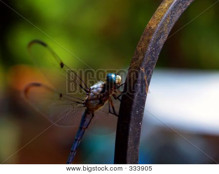 Dragonfly On Rod