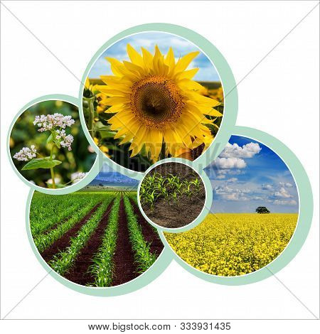 Individual Design Circle Design For Agrarian Theme With Photo