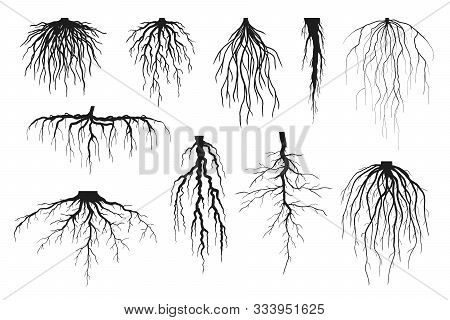 Tree Roots Silhouettes Isolated On White, Vector Set Of Taproot And Fibrous Root Systems Of Various