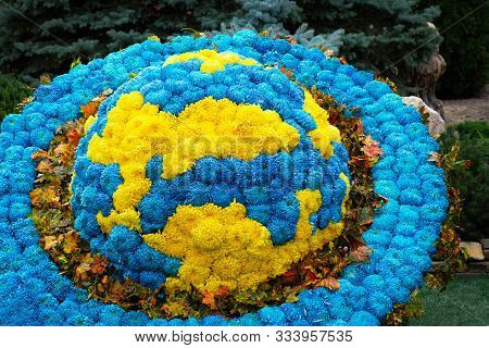 Exposition Of Chrysanthemums From Planet Earth Close-up. From Yellow And Blue Chrysanthemums The Exp