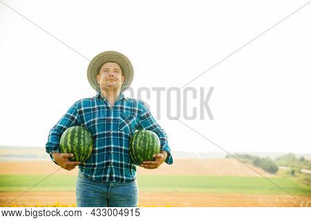 Satisfied Farmer With Two Watermelons In The Field On A Sunny Summer Day. Man With Hat On His Head H