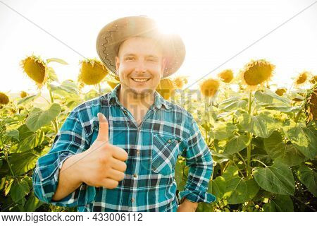 Cheerful Farmer With Hat Shows Thumb Up And Looking At Camera. Fat Man Is In The Sunflower Field Enj