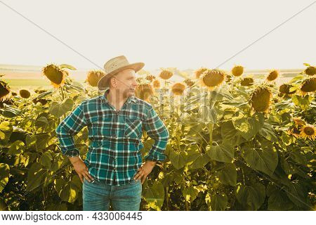 Farmer With His Hands On His Hips And Hat On His Head In The Sunflower Field. Man On A Sunny Summer