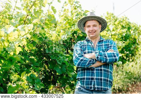 Wine Farmer In A Shirt With Squares Is On The Vineyard With Vines, The Man With The Hat Smiles And L