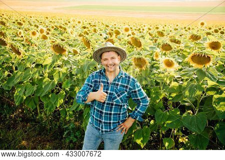 Top View Of Cheerful Farmer With Hat Shows Thumb Up And Looking At Camera. Fat Man Is In The Sunflow