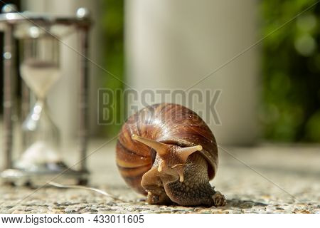 Dark Achatina Snail With Dark Shell Crawling On The Stone Floor Near Hourglass. Deadline Concept And