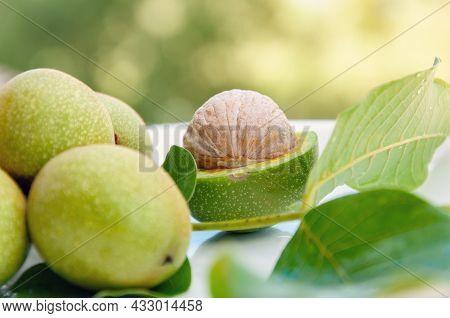 Ripe Walnut With Green Shell On Greenery Background. Walnut In Green Peel