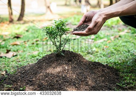 Man Holding The Soil In Two Hands To Add More Soil To The Planted Seedlings Into The Ground While Wo