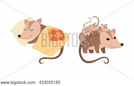 Cute Opossum Animal Sleeping On Pillow Under Blanket And Carrying Baby On Its Back Vector Set