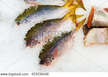 Sea Fish In The Ice On The Counter Of The Store. Trade In Seafood
