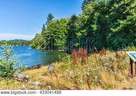 A View  Of The Shoreline In The Woodard Bay Conservation Area In Olympia, Washington.
