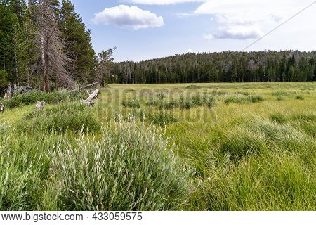 Marsh And Grassy Area Near Fiddler's Lake Near Lander, Wyoming In The Shoshone National Forest