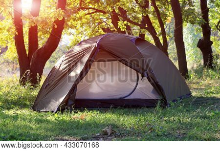Tent in tourist camp in sunny green forest