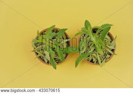 Stevia Rebaudiana.natural Sugar Substitute. Dry And Fresh Stevia In Cups .organic Natural Low Calori