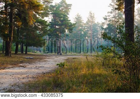 Picturesque Nature Foggy Morning Landscape. Narrow Winding Path Through The Meadow Into The Forest.