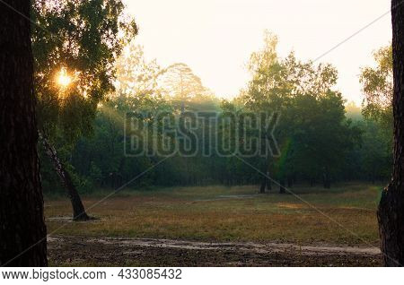 Rays Of The Sun Shine Through The Tree Leaves. Scenic Sunrise In Forest. Light Fog Adds Some Mystery