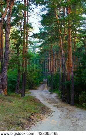 Picturesque Morning Landscape View Of Dirt Road In The Autumn Forest. Forest Path In The Morning. Fo