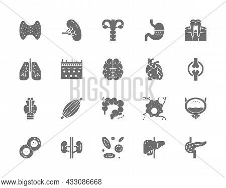 Set Of Human Organs Grey Icons. Spleen, Stomach, Lungs, Brain, Heart And More.