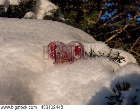 Flower And Fruits In Frozen Water, Colorful Object In Ice In Shape Of Heart In Snow On A Pine Tree B