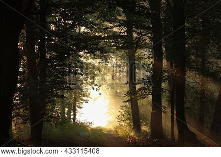 Road path autumn forest woods Nature trees sunset landscape Nature landscape Nature landscape landscape Nature background Nature landscape Nature background landscape Nature background Nature landscape Nature background Nature landscape Nature background.