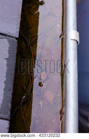 A Close Up Portrait Of A Clogged Roof Gutter Full Of Rain Water During A Rainy And Cloudy Day. The B
