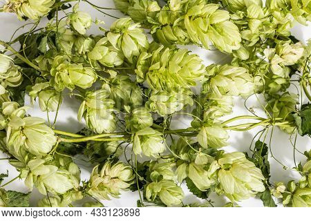 Green Ripe Hop Cones Isolated On White Background