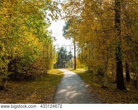 Bright Golden Autumn. The Footpath Goes Through Yellow And Green Trees.