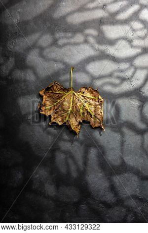 Halloween minimal concept with dry autumn leaf, moonlight and scary forest shadow. Creative spooky holiday fun background