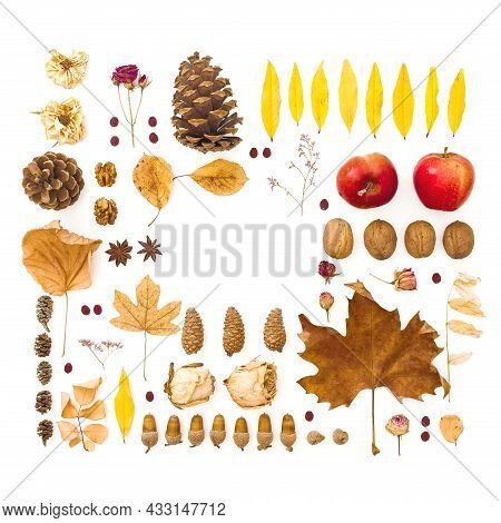 Autumn Composition. Dried Leaves, Flowers, Walnuts, Pine Cones On White Background. Thanksgiving Day