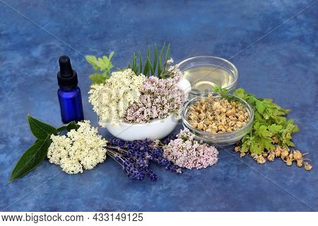Healing herbs of valerian, lavender, elderflower and chamomile used in preparation of natural herbal plant medicine. Used as a sedative to treat anxiety, insomnia. On mottled blue background.