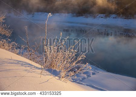 Small Bush Covered With Hoarfrost On The River Bank On A Sunny Frosty Morning. Winter Landscape.