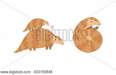 Pangolin Or Scaly Anteater With Clawed Paw Carrying Baby On Its Back And Curled Up Into Ball Vector