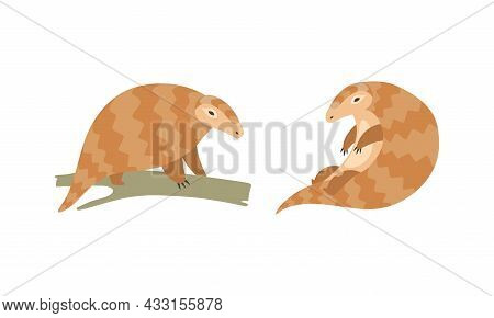 Pangolin Or Scaly Anteater With Clawed Paw Sitting On Tree Branch Vector Set