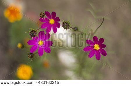 Delicate Summer Flowers On A Beautiful Background With Bokeh. Selective Focus.