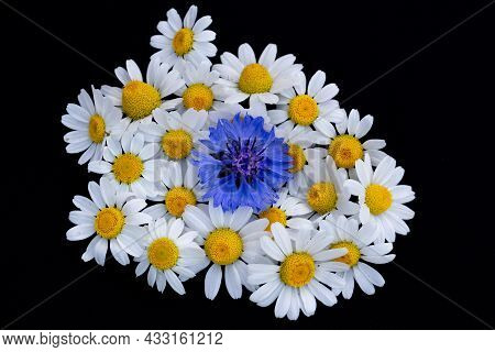 Delicate Daisies And Cornflower On A Black Background, Place For Text, Copy Space