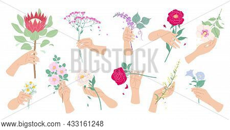 Female Hands Touching And Holding Blooming Flowers. Set Of Colorful Floral Composition With Summer P