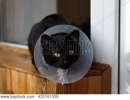 Young Black Cat In A Protective Veterinary Collar Is Sitting By The Window.