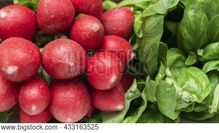 Close-up View Of Bunches Of Fresh Radish With Green Leaves. Fresh Organic Radish Bunch. Healthy Eati