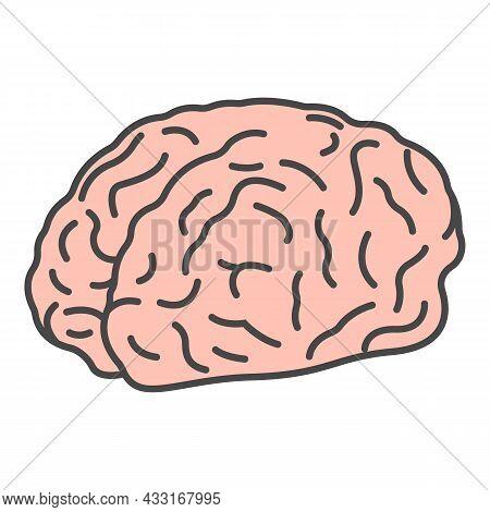 Genius Brain Icon. Outline Genius Brain Vector Icon Color Flat Isolated On White