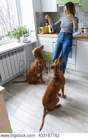Owning Dog At Home: Happy Woman Of Middle Age Playing And Training Two Polite Wirehaired Vizsla In K