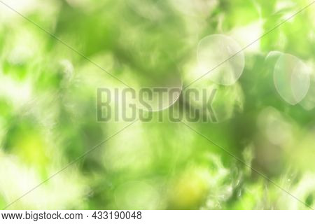 Abstract Blurry Green Nature Background, Green Color Blurry Bokeh Wallpaper