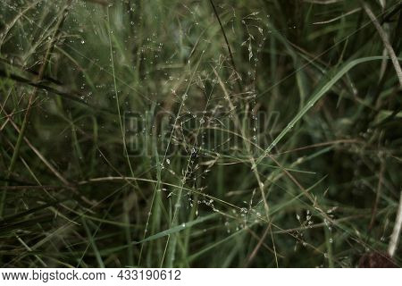Water Drops On Fresh Green Grass Background. Green Grass Background. Dew In The Morning