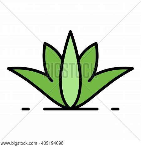 Natural Aloe Vera Icon. Outline Natural Aloe Vera Vector Icon Color Flat Isolated On White