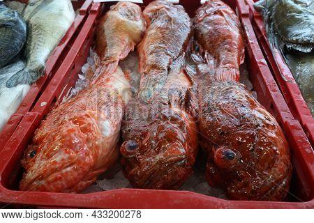 Different Sea Fish At A Fish Market In Croatia
