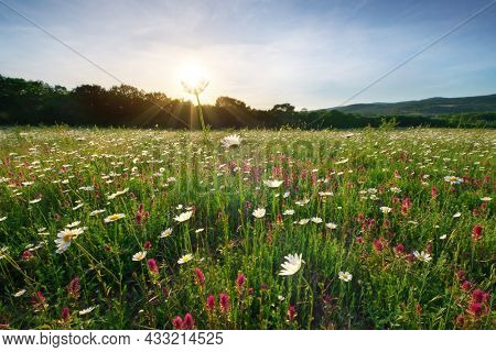 Spring camomile flowers and sunshine. Nature composition.
