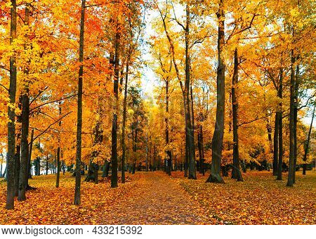 Autumn Scenery With Footpath In Colorful Forest.