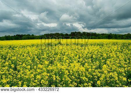 Dark Clouds Over The Yellow Rape Field